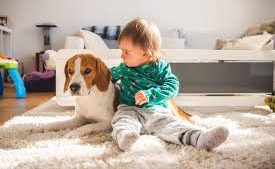 Child & Pet Proofing Your Home
